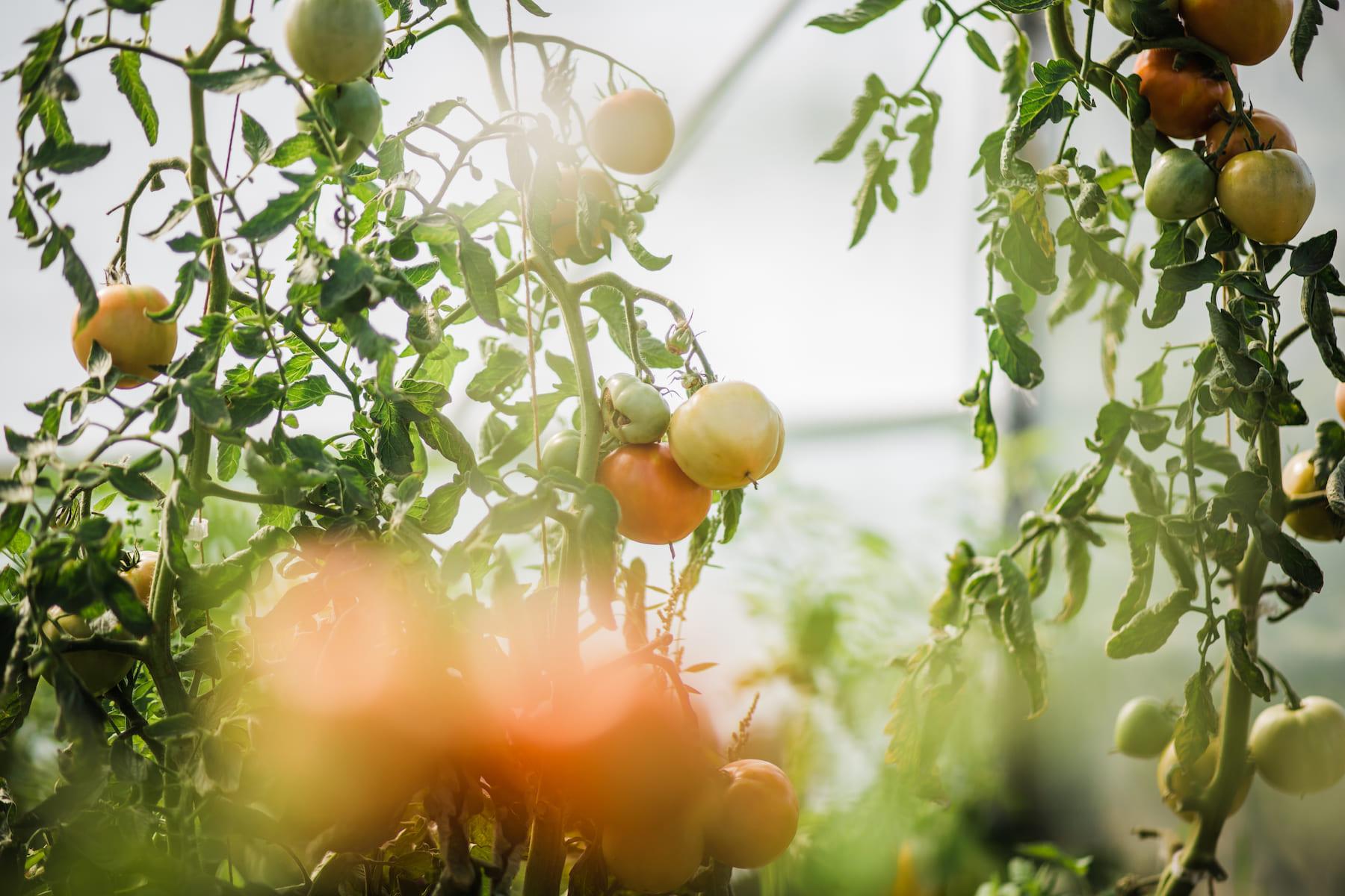 Kasteelhoeve Wange Landen groenten fruit nieuws duurzaamheid