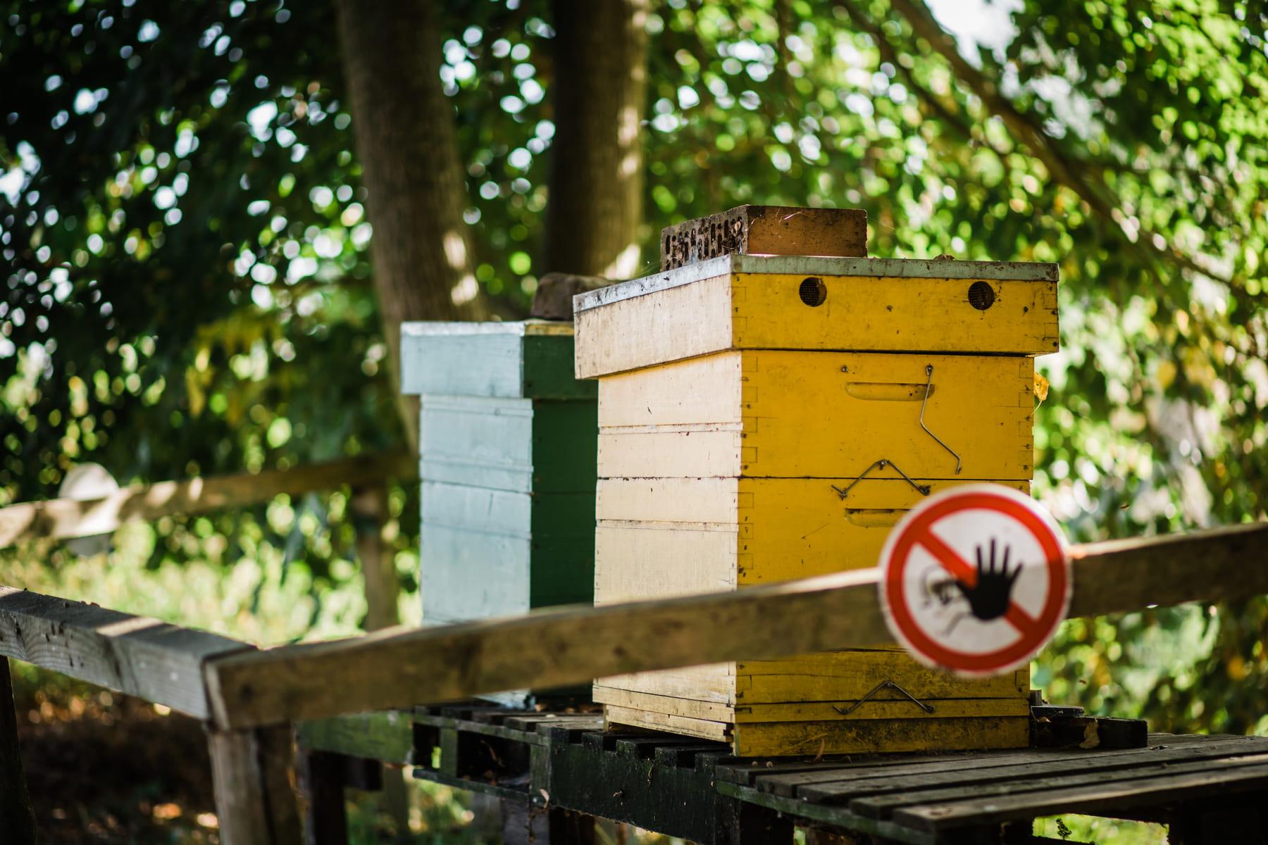 Kasteelhoeve Wange activiteiten B&B Hotel Landen bijenrondleiding bij