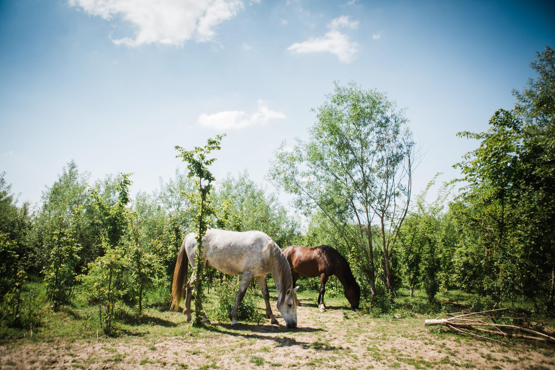 Kasteelhoeve Wange faciliteiten domein natuur paarden Landen