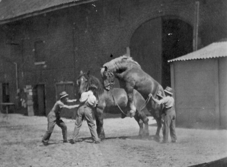 Kasteelhoeve Wange B&B Hotel geschiedenis nieuws activiteiten paarden authentiek